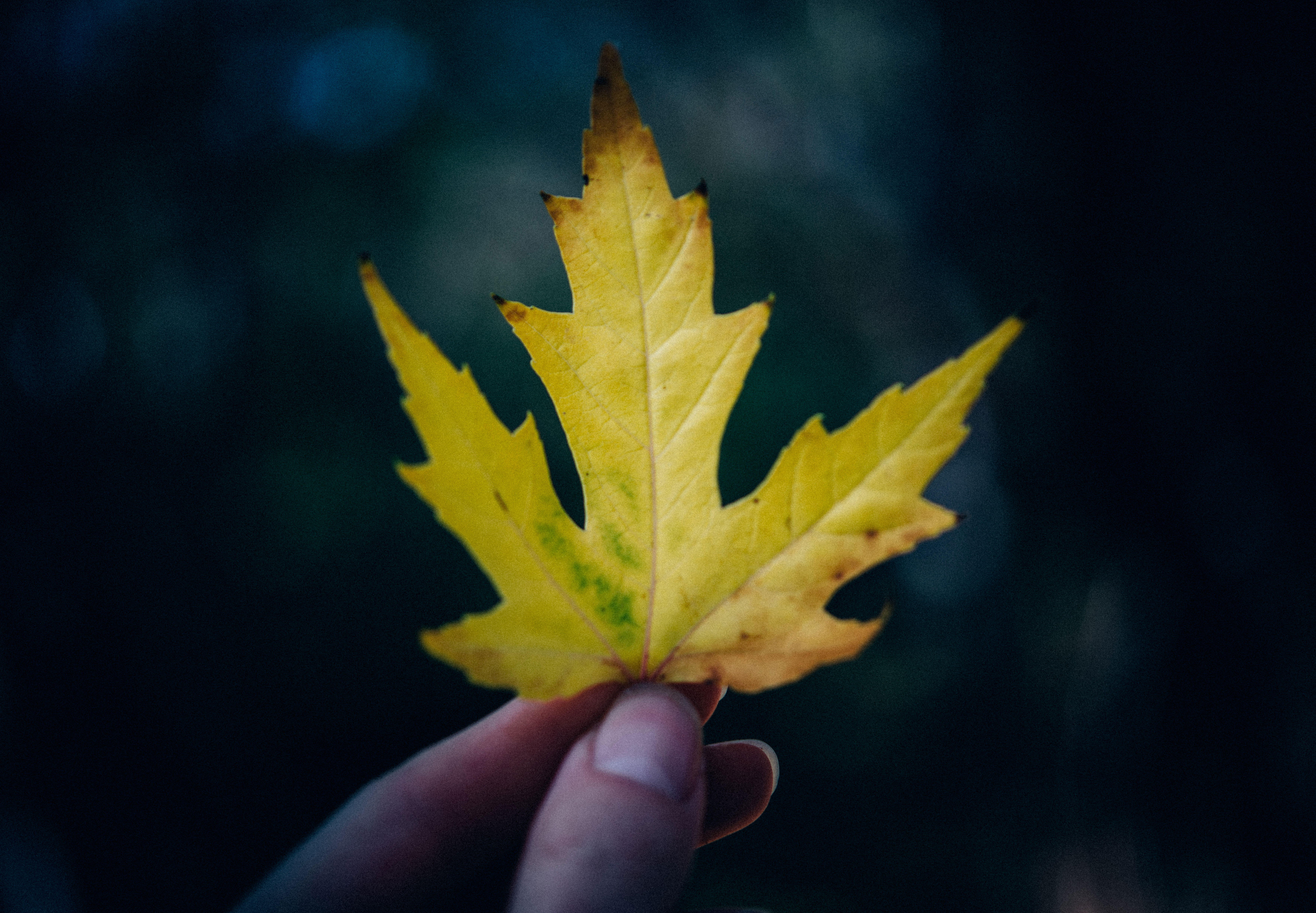 fingers holding a yellow leaf